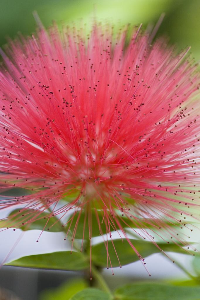 shin-kiba-botanical-garden7